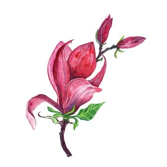 Disposizione dei fiori, ghirlanda floreale con fiori di magnolia, isolato