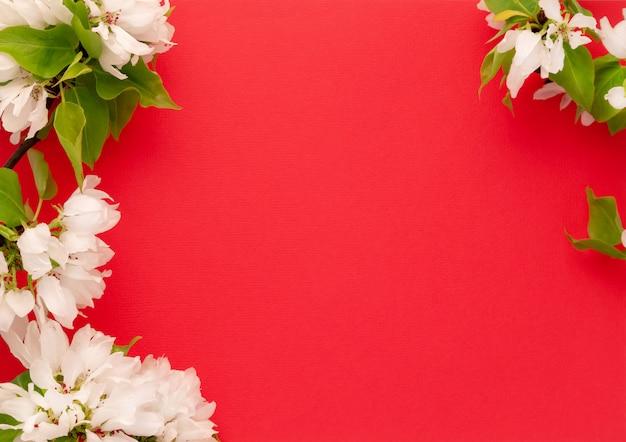 Disposizione del piano del fondo di rossi carmini del ramo del fiore di melo. insegna lunga di web del modello di vista superiore dei germogli di fioritura bianchi. copia spazio mockup design di sfondo. concetto floreale dell'invito dei fiori freschi della struttura della molla