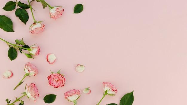 Disposizione delle rose bella copia spazio