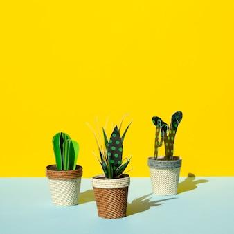 Disposizione di vista frontale di cactus su sfondo giallo