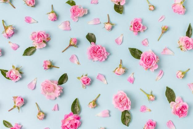Disposizione graziosa del primo piano delle rose