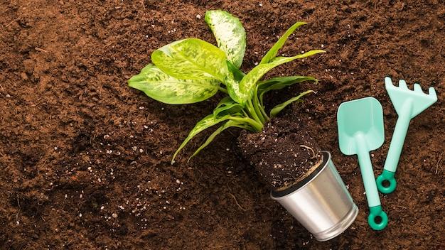 Disposizione piana degli strumenti di giardinaggio e della pianta con copyspace