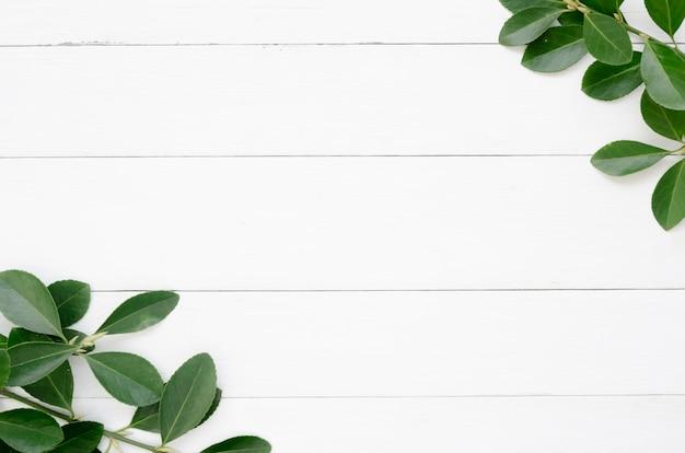 Disposizione piana del concetto delle foglie con lo spazio della copia