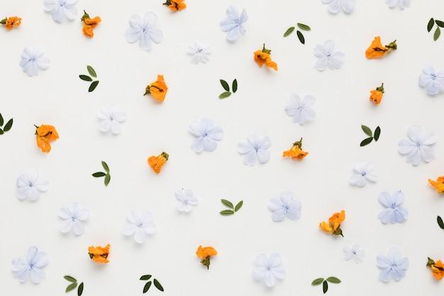 Disposizione piana della disposizione floreale di concetto