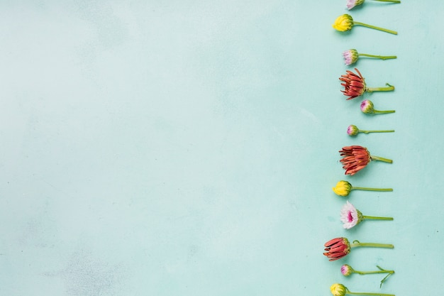 Disposizione piana delle margherite e delle rose della molla con lo spazio della copia