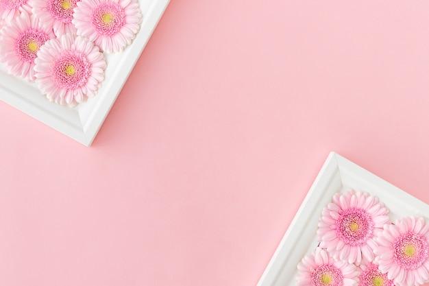 Disposizione piana di cornici bianche con gerbere di fiori rosa