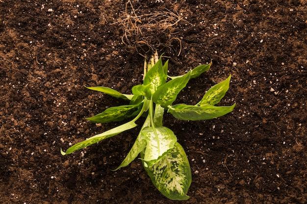Disposizione piatta della pianta verde