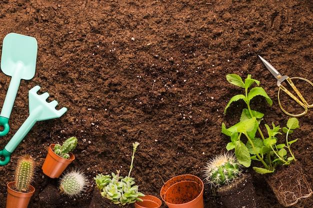 Disposizione piatta di cactus e attrezzi da giardinaggio con copyspace
