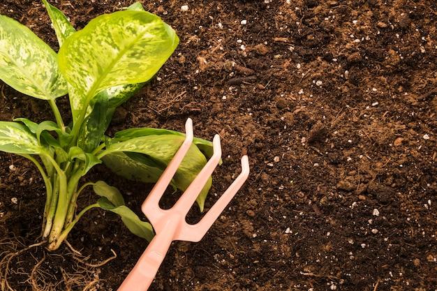 Disposizione piatta di piante e rastrelli