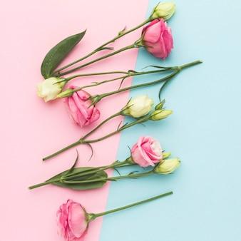 Disposizione piatta mini rose bianche e rosa