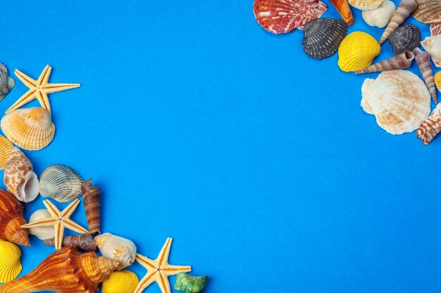 Disteso. vista dall'alto. cornice di conchiglie di vario genere su blu