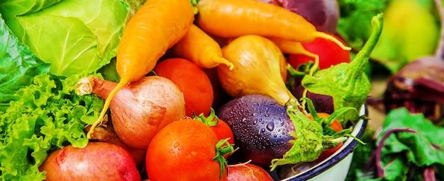 Diverse verdure biologiche. foto. natura del cibo.