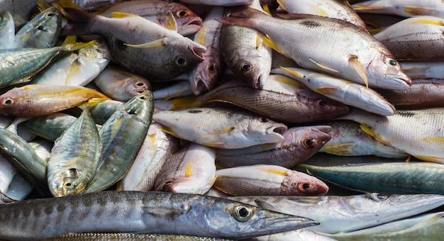 Diversi tipi di pesce di mare