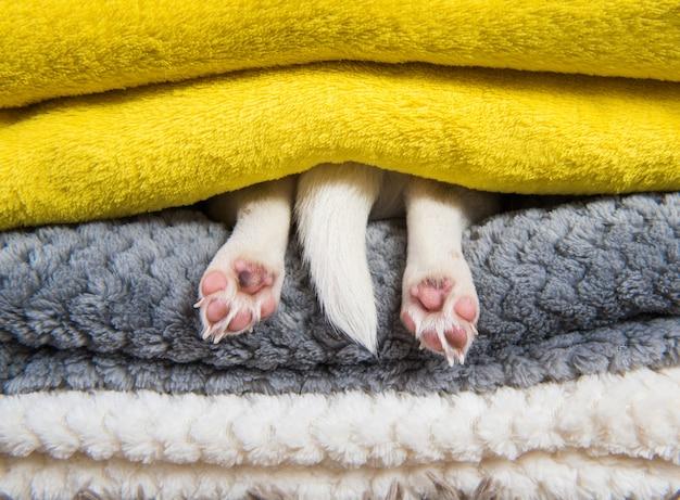 Divertente cucciolo dorme sotto la coperta nel letto