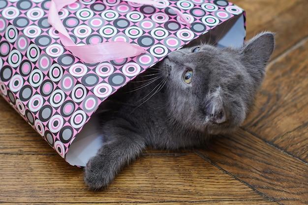 Divertente gattino grigio arrampicato in un pacchetto regalo