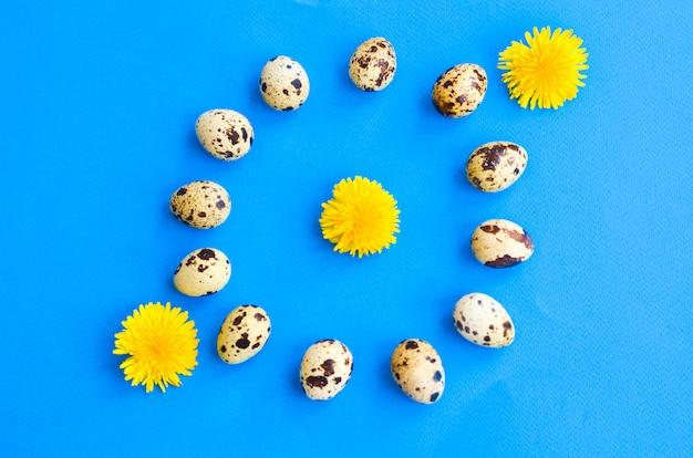 Dodici uova di quaglia accatastate attorno a un cerchio e tre fiori di tarassaco sul blu