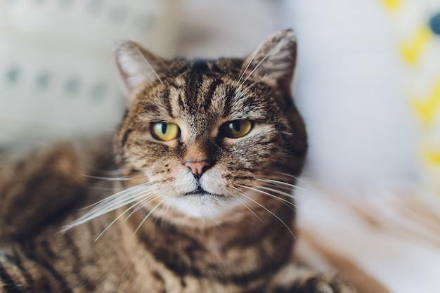 Dolce gatto dorato sdraiato sul divano