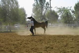 Domare un cavallo