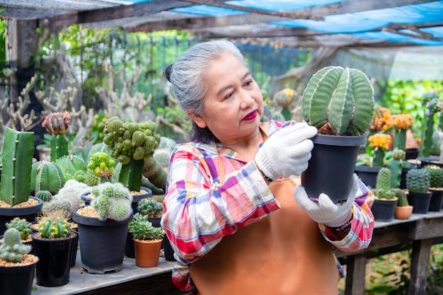 Donna anziana che esamina integrità dell'albero di cactus