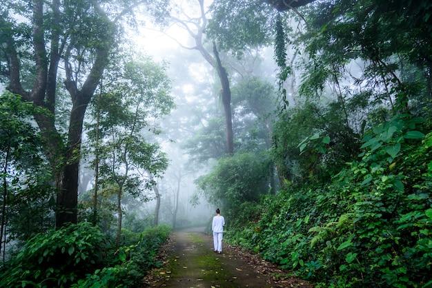 Donna che cammina meditazione vipassana in una tranquilla foresta nebbiosa