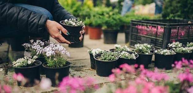 Donna che compra pianta in vaso al mercato dei fiori