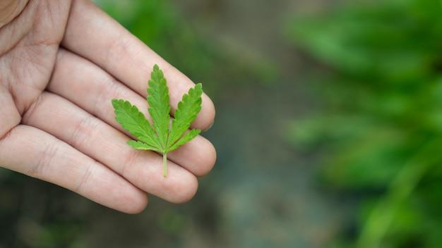 Donna che mantiene una foglia di marijuana su uno sfondo verde.