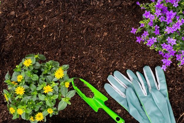 Donna che pianta giovani piantine di insalata di lattuga nell'orto.