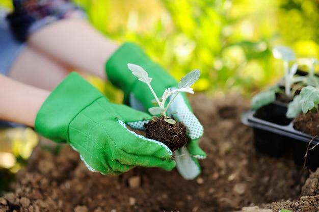 Donna che pianta le piantine a letto nel giardino al giorno soleggiato di estate