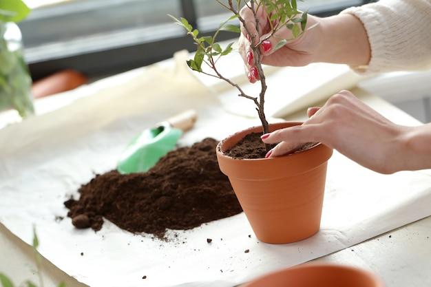 Donna che pianta un piccolo albero dentro la casa