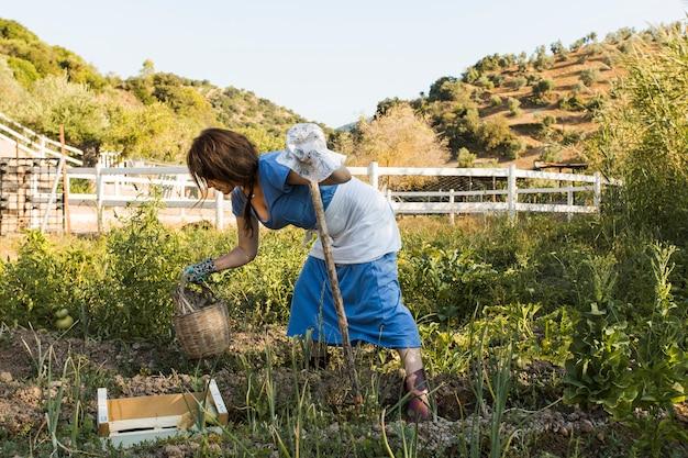 Donna che raccoglie verdure in campo
