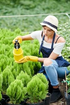 Donna che si prende cura di piccole piante di cipresso