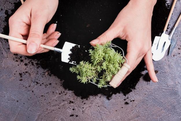 Donna che si prende cura di una pianta