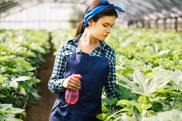 Donna con bottiglia spray guardando le piante in serra