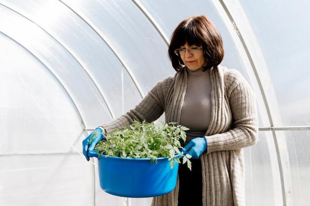 Donna con un secchio di piantine di pomodoro in serre