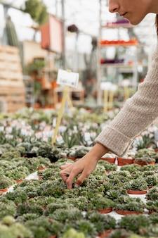 Donna del primo piano che prende cura delle piante