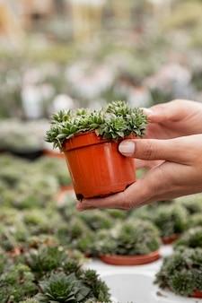 Donna del primo piano che tiene piccolo vaso da fiori