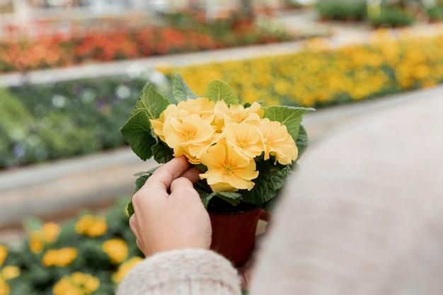 Donna del primo piano che tiene un fiore in vaso