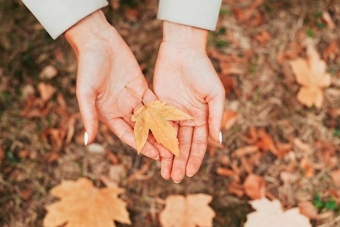 Donna di vista superiore che tiene una foglia in autunno