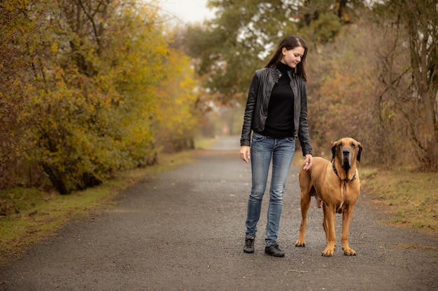 Donna di yong con la razza di brasile fila brasile del grande cane nel parco di autunno