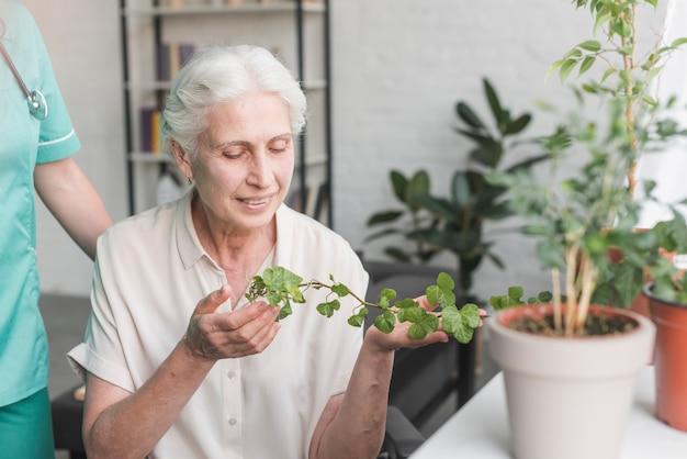 Donna senior felice che esamina edera che cresce in vaso