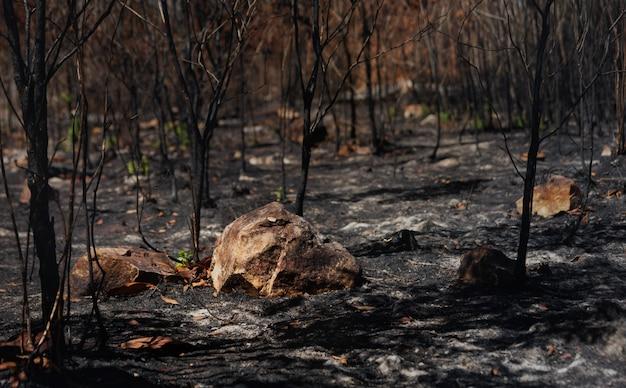 Dopo incendi con polvere e ceneri / area di deforestazione illegale. riscaldamento globale / concetto di ecologia.