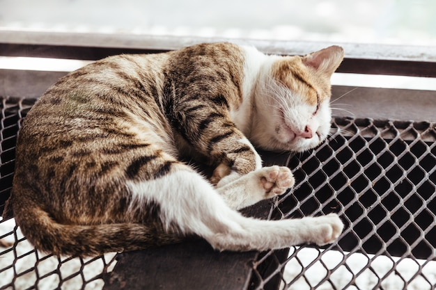 Dormire gatto nero, marrone e bianco pelliccia sul pavimento in acciaio mesh con sfondo sfocato.