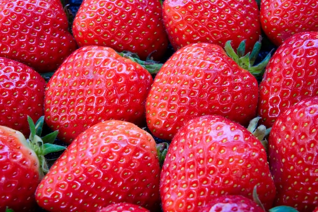 Dozzina di fragole rosse fresche