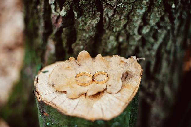 Due anelli di nozze d'oro sul ceppo di quercia incrinata con una foglia secca