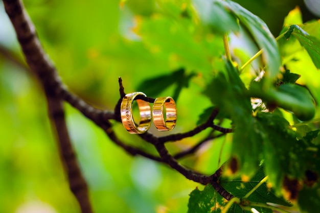Due anelli di nozze su un ramo