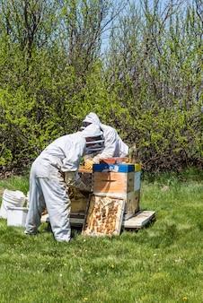Due apicoltori irriconoscibili che ispezionano i vassoi di covata dall'alveare super
