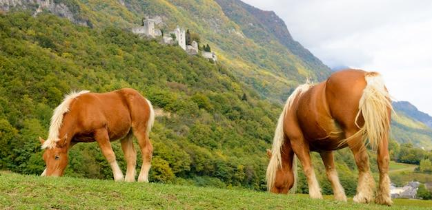 Due bellissimi cavalli marroni alla base della montagna