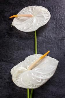 Due calla bianca o giglio di arum su fondo scuro, composizione verticale