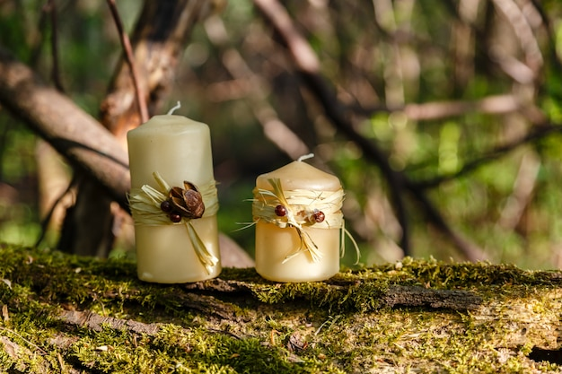 Due candele, due candele su un vecchio tronco nella foresta.