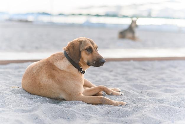 Due cani amichevoli si rilassano sulla spiaggia tropicale di sabbia vicino al mare blu.